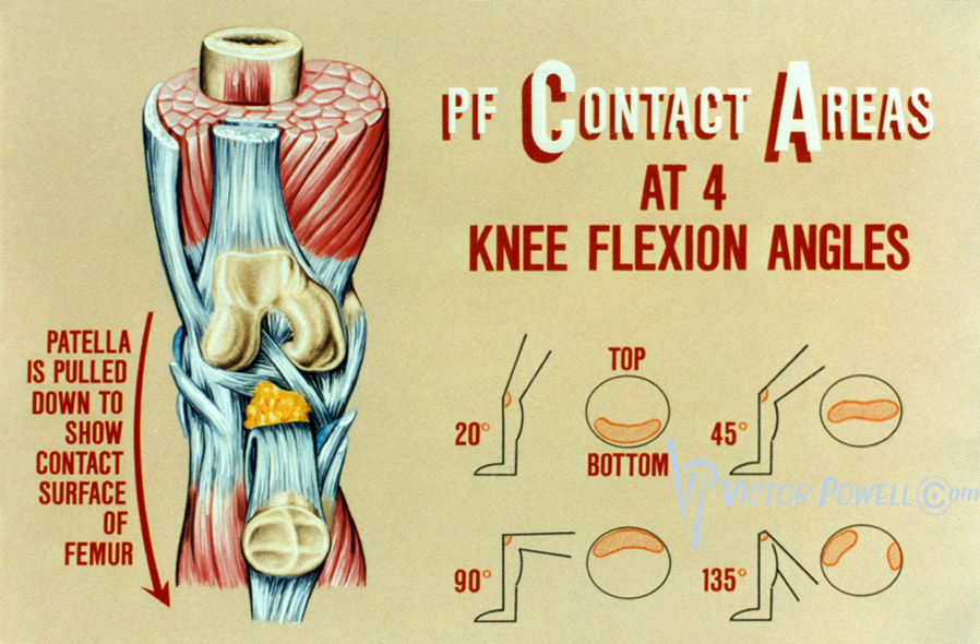Knee Flexion Angles