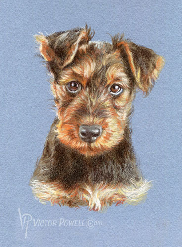 Airedale Terrier Puppy Portrait
